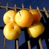 June Yellow Plum Tree, Plum Trees, Free Plum Tree Video, Low Plum Tree Price http://www.tytyga.com/June-Yellow-Plum-Tree-p/june-yellow-plum-tree.htm