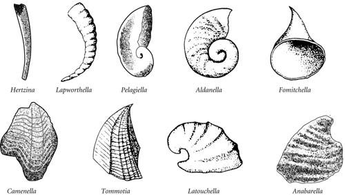 Elements of the Tommotian-type or small shelly fauna.