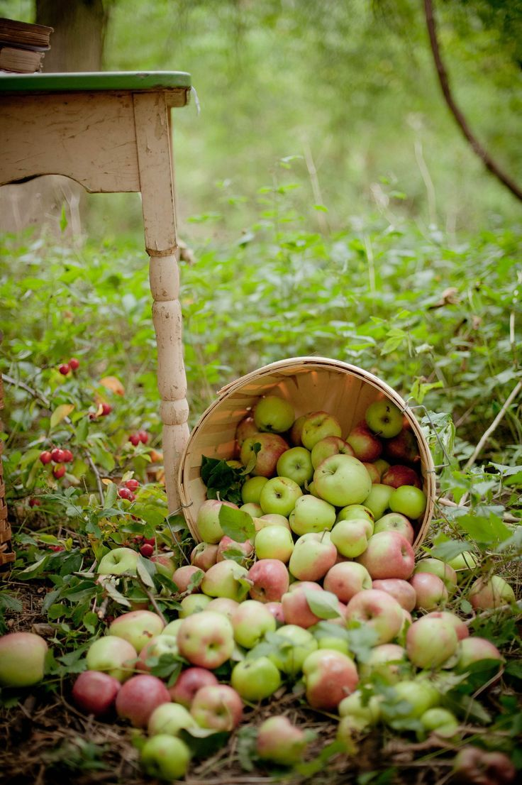 Each fall I'd prepare my winter's store of applesauce on the wood cook stove!!   One of my fondest memories!!  ~ Libby