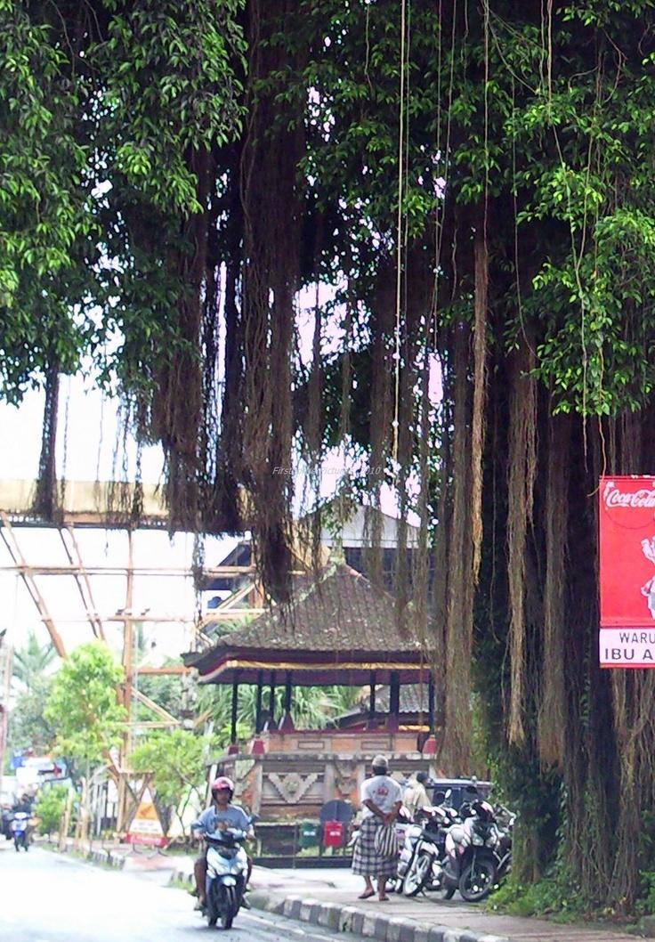 #Bali #Ubud