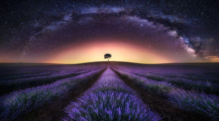Photograph Lavender Field & Milky Way I by Jesús M. García ...