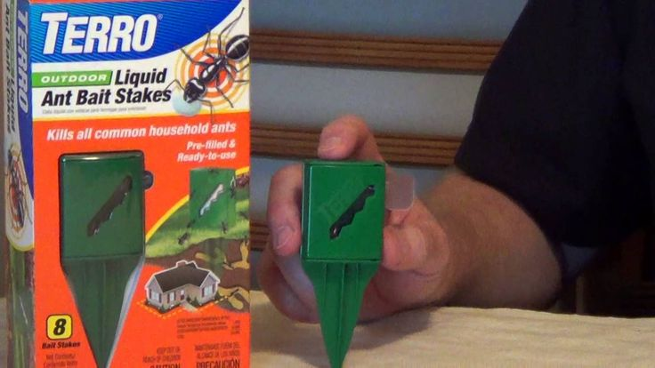 TERRO Ant Killer - How to Keep Ants Out of Your House