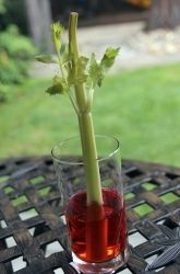 First Grade Physical Science Activities: Celery Science Experiment