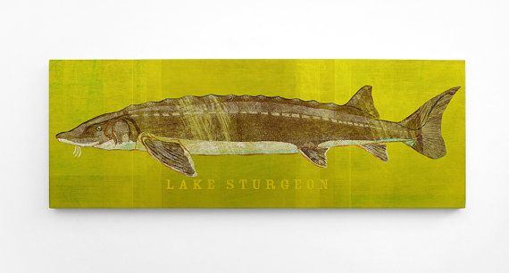 Lake Sturgeon Art Block Lake House Art Gift for Men by johnwgolden