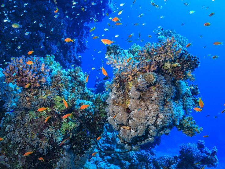 Saving the Belize Barrier Reef Essay
