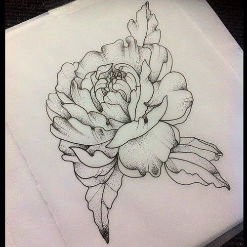 Peony #peony #tattooapprentice #drawing #dotwork