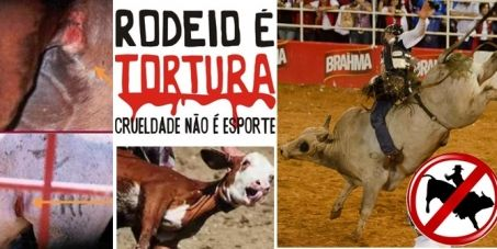 Ban rodeos during festivals in Cotia City, Brazil. Prefeitura e Câmara Municipal de Cotia.: PROIBIÇÃO DO RODEIO NAS FESTAS DA CIDADE DE COTIA/SP.