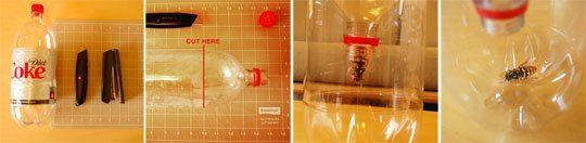 How To: Make a 2 Liter Soda Bottle Wasp Trap