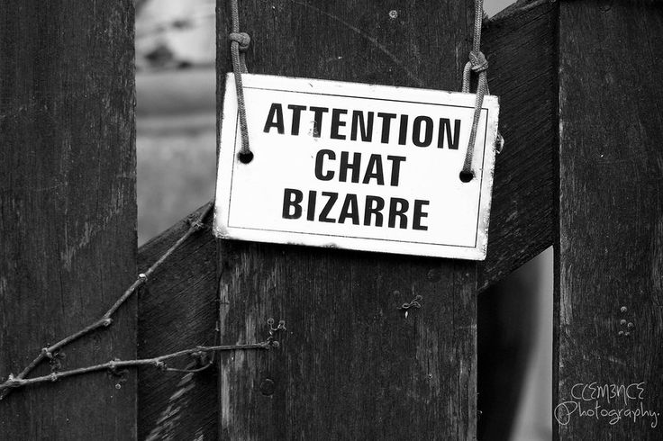 Attention chat bizarre. by ~Clem3nce on deviantART