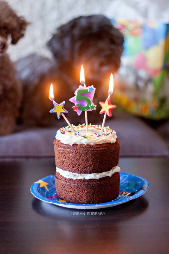 Dog Birthday Carrot Cake with Neufchâtel Cheese Frosting | URBAN BAKES