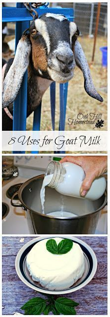 8 delicious uses for goat milk, from Oak Hill Homestead
