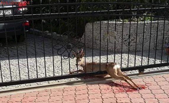 Koziołek utknął w bramie. Pomogli mu strażacy