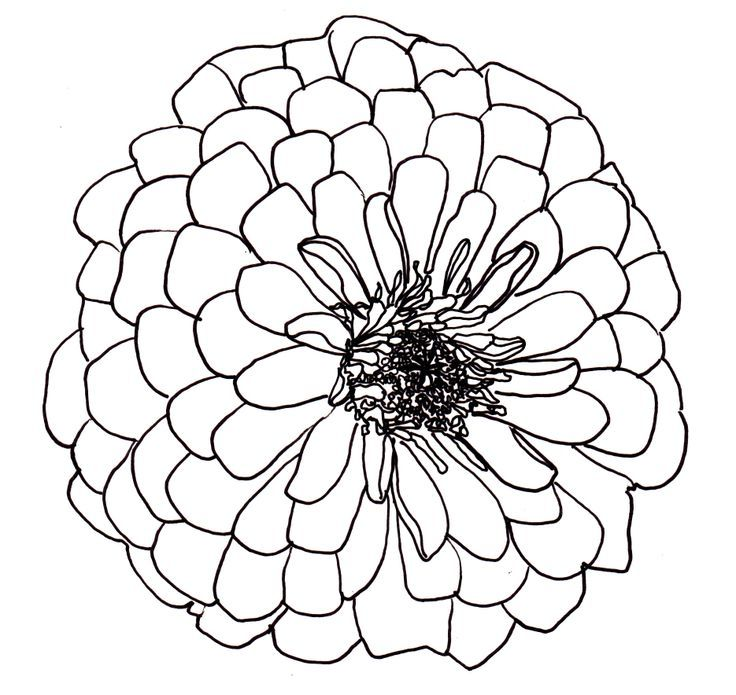 Flower Circle Line Drawing : Top ideas about flower line drawings on pinterest