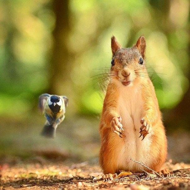 Finnish Squirrel-Whisperer Feeds Wild Animals For Cute Wildlife Photos