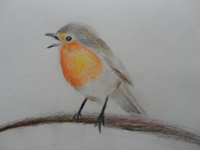 pencil crayon sketch of a Robin