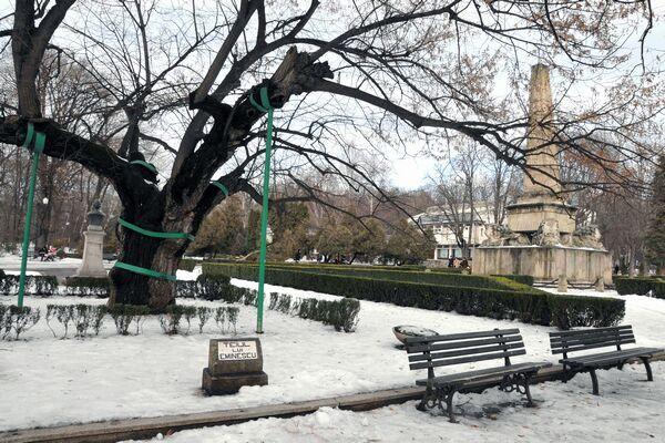 Teiul lui Eminescu din parcul Copou, Iași