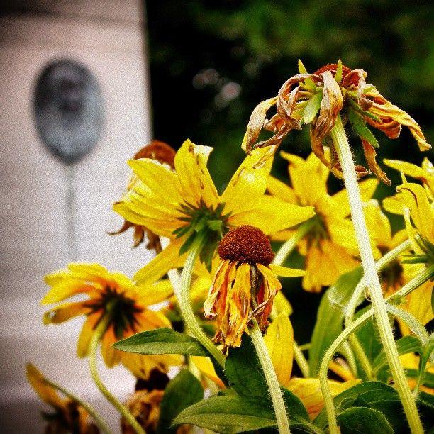 Photo by jbleakley2cogecoca #Niagara #Brock #Monument
