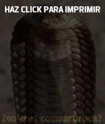 Top 5 de las serpientes más venenosas | SERPIENTEPEDIA