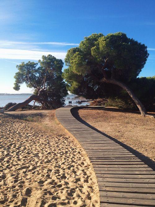 travelingcolors: Doñana National Park, Huelva | Spain (by Nacho Coca)