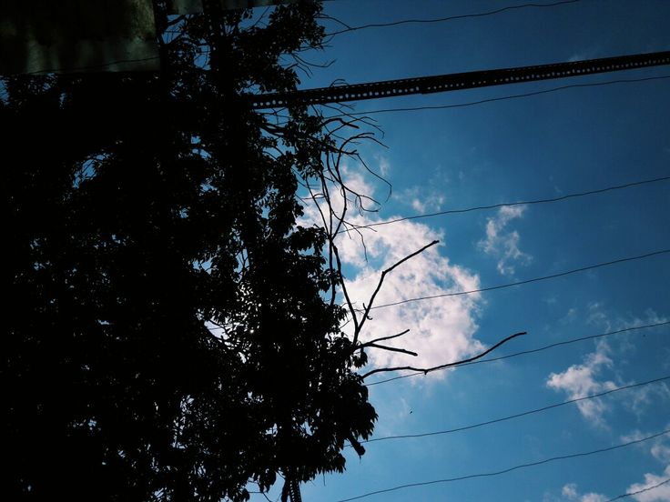 blue sky x tree siluet