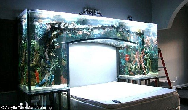 Chad Ochocinco Sleeps Underneath A Giant Aquarium - Business Insider