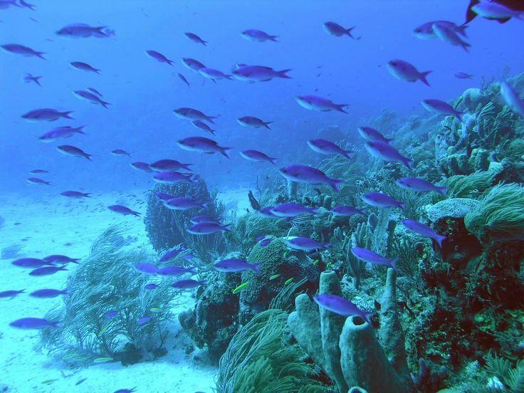 10 Best Snorkelling Spots in Roatán