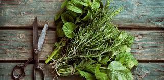 Résultats de recherche d'images pour «support fines herbes cuisine»