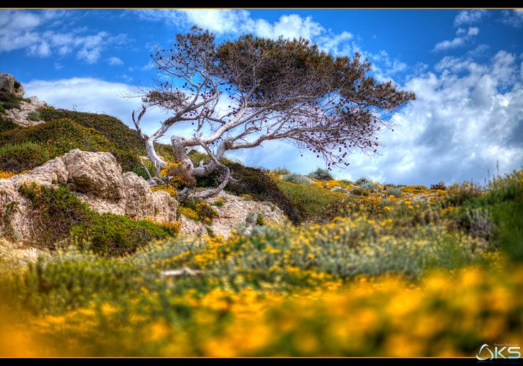 Yellow by Karim SAARI on 500px  #calanque #calanques #landscape #landscapes #marseille #nature #provence #tree #trees #yellow