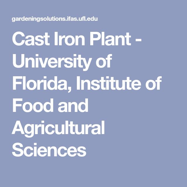 Cast Iron Plant - University of Florida, Institute of Food and Agricultural Sciences