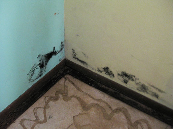 mold in the basement bedroom the question is how much of the house is