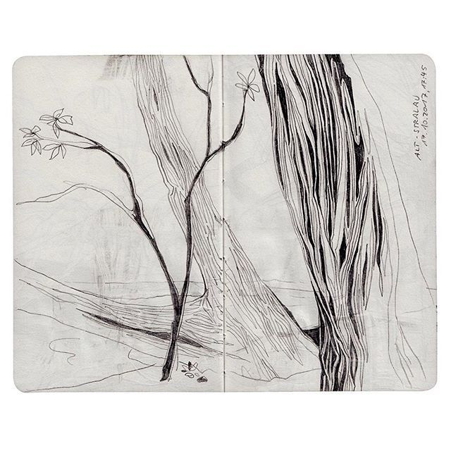 A new drawing from my sketch book: The trees on the shore in Alt Stralau, Berlin. Illustration by Theresa Grieben  . ⠀  #illustration #drawing #traveldiary #sketching #pencil #blackandwhite #linedrawing #zeichnung #zeichnen #theresagrieben #berlinartist #berlin #berlinillustration  #picame #trees #treedrawing  #erinnerung #tagebuch #altstralau #lineart #art #schwarzweiss #skizze #graphite #pencildrawing #bkkmakes #cityart #baum #texture #struktur