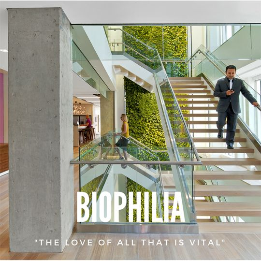 "Biophilia, ""The love of all that is vital"""