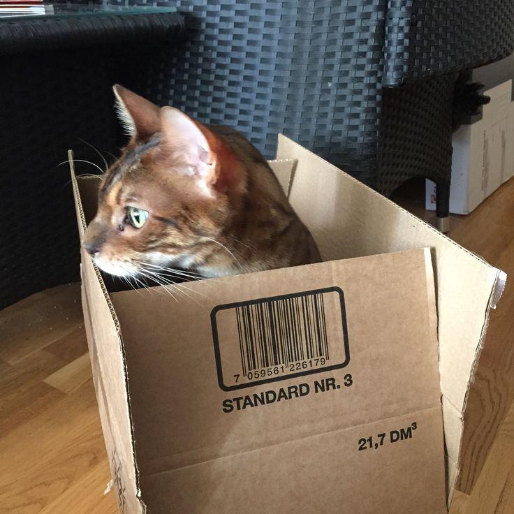 Oohhh a box!