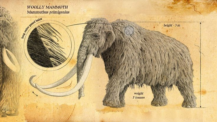 BBC Two - Ice Age Giants - In pictures: The ice age giants
