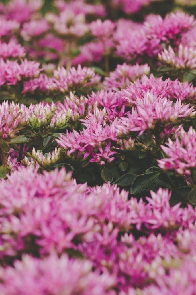 Begin Your Organic Garden By Following These Tips Today Garden