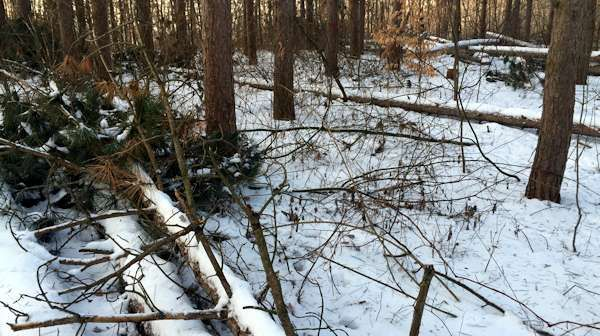 TSI or Timber Stand Improvement work can be scary when first discussed but the benefits of a few cuts far exceed the costs. Chainsaws truly are one of the most valuable tools in the deer hunters shed, you just can't be too afraid of using it. So gas, oil, and sharpen it up the off season has already started and now is the perfect time to start.