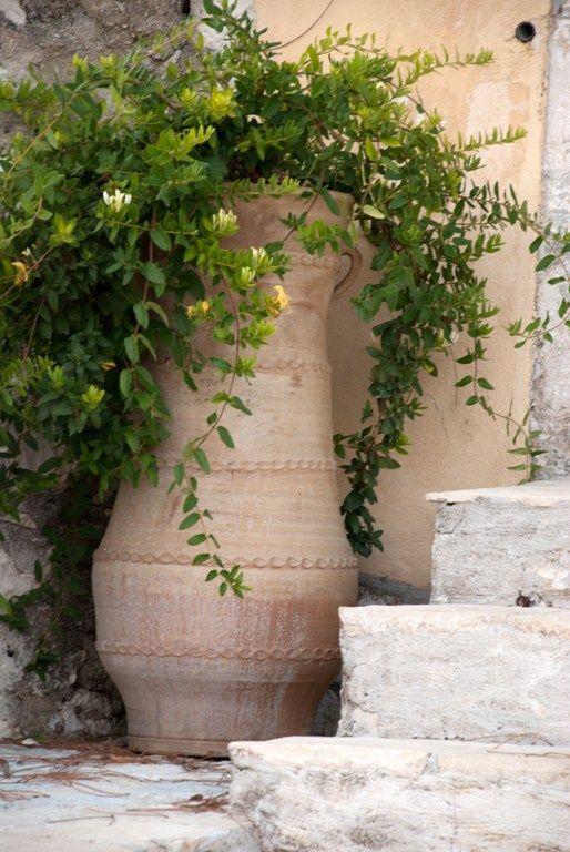 honeysuckle in a big urn // Great Gardens & Ideas //