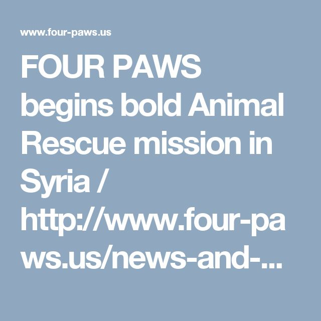 FOUR PAWS begins bold Animal Rescue mission in Syria / http://www.four-paws.us/news-and-press-2/press-releases/four-paws-begins-bold-rescue-mission-in-syria/