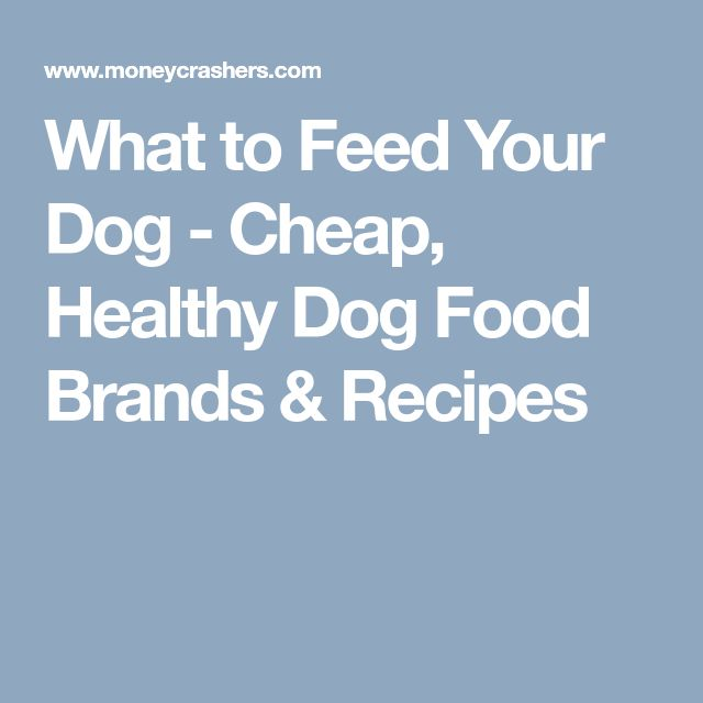 What to Feed Your Dog - Cheap, Healthy Dog Food Brands & Recipes