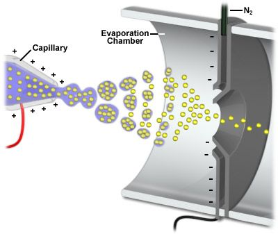 Electrospray ionization - Charged particles fly to counter electrod. Solvent evaporated so only analyte enters. Analyte flies into Mass analyzer. m/z ratio calculated for determination of molecular mass down to 0.01%.