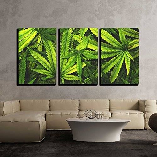 "Shop https://goo.gl/Ngx18G   wall26 - 3 Piece Canvas Wall Art - Cannabis Texture Marijuana Leaf Pile Background with Flat Vintage Style - Modern Home Decor Stretched and Framed Ready to Hang - 16""x24""x3 Panels    Price 49.99   Go to Store https://goo.gl/Ngx18G  #3 #Art #Background #Cannabis #Canvas #Decor #Flat #FRAMED #Home #Leaf #Marijuana #Modern #Piece #Pile #Stretched #Style #Texture #Vintage #Wall #Wall26"