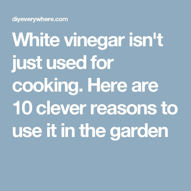 White vinegar isn't just used for cooking. Here are 10 clever reasons to use it in the garden