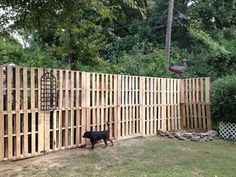 Build a pallet fence for next to nothing.