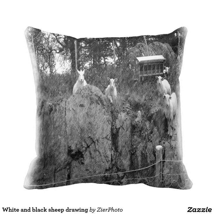 White and black sheep drawing pillows
