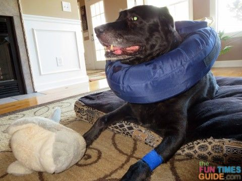 A Better E-Collar For Dogs: This Inflatable Dog Collar Works Great For A Dog Hot Spot! | The Fun Times Guide to Dogs