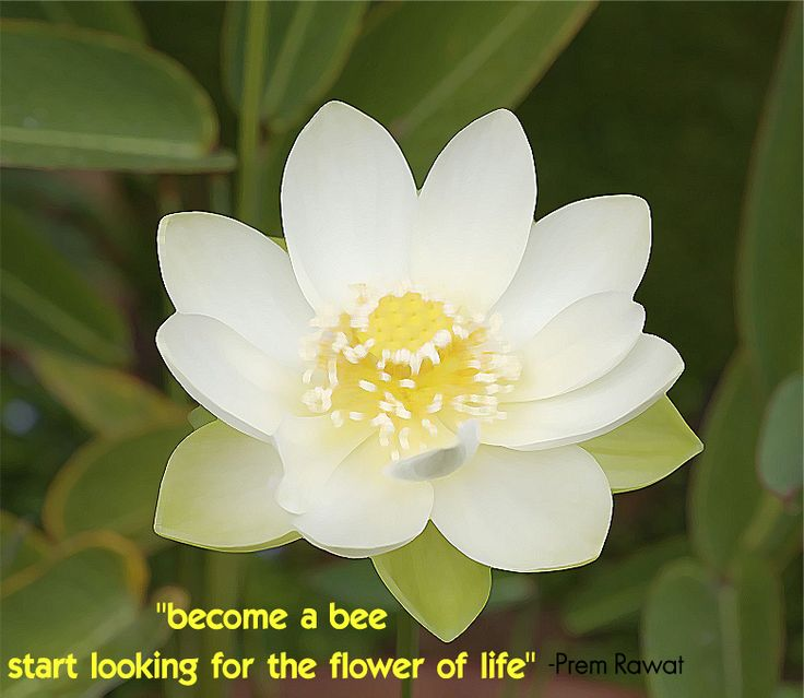 Become a Bee. Prem Rawat - Words of Peace www.wopg.org