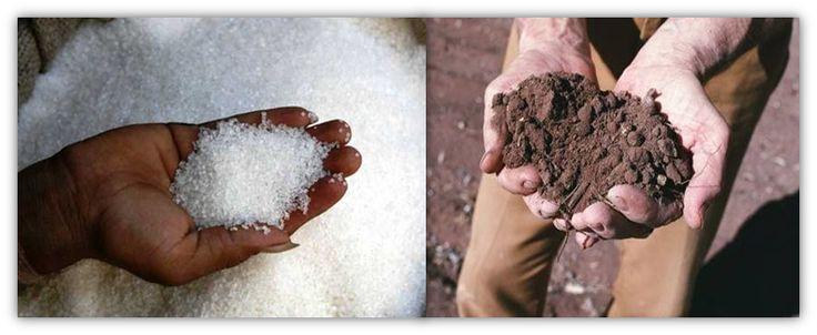 TEMAS  AGROPECUARIOS: FERTILIZANTES: NATURALES, ORGÁNICOS, QUÍMICOS, SIN...