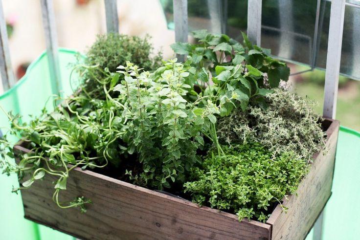 Les 25 meilleures id es concernant conception de jardin d 39 herbes aromatiques sur pinterest - Petit jardin aromatique ...