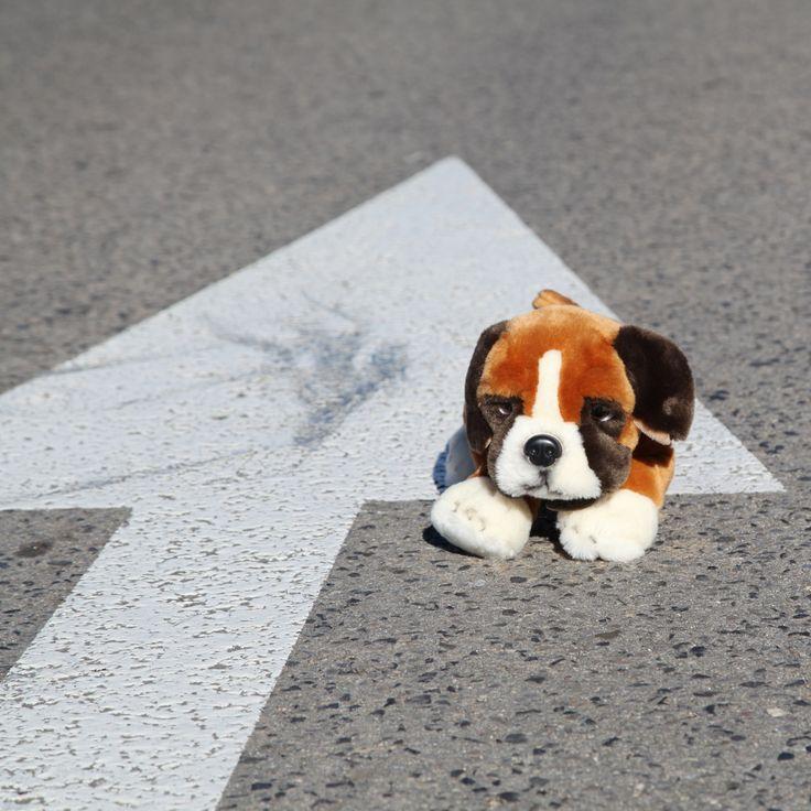 El perrito Bóxer Bumper de peluche es el perrito más achuchable que existe. Un peluche que muestra a la perfección lo divertidos y fieles que son los Bóxer. Nuestro amigo lleva un collar que pone su nombre: Bumper.  Los Bóxer son una raza de perro alemana de trabajo y compañía, se caracteriza por tener tendencia a la genética, sus características hacen que sea un perro imponente, además de que no tantas veces puede ladrar, sólo cuando la ocasión lo acredita o en estado de emoción.