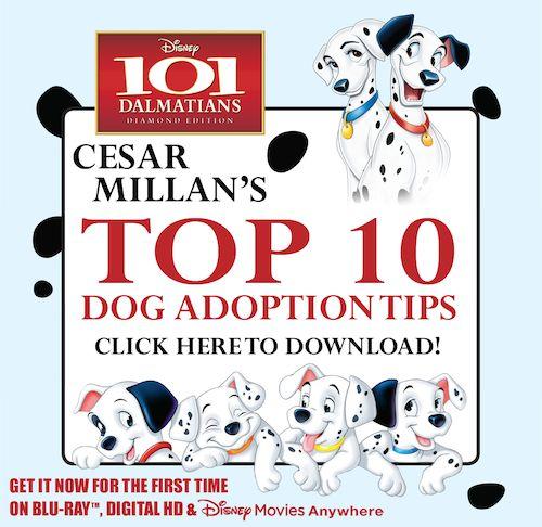 1000 images about dog rescue on pinterest cesar millan dog psychology and dog nose. Black Bedroom Furniture Sets. Home Design Ideas